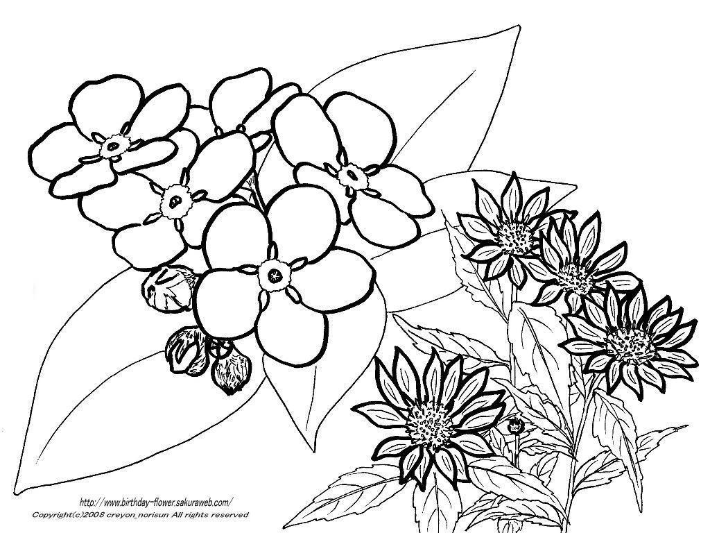 すべての講義 1月 塗り絵 : ... ー4月の誕生月の花の塗り絵